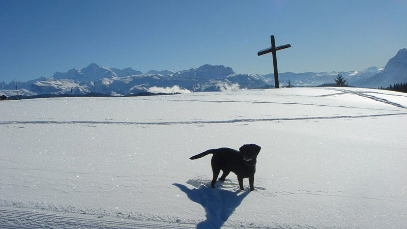 dog snow cross